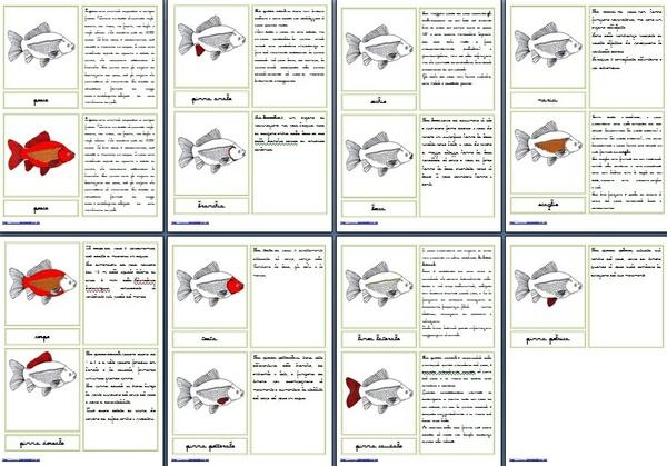 Nomenclature Montessori 6-9 anni PARTI DEL PESCE corsivo