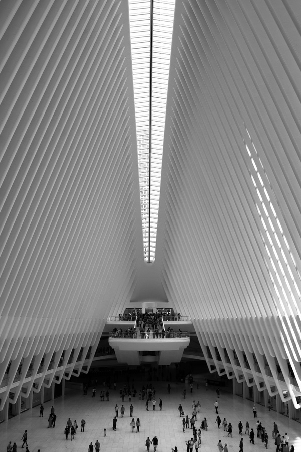 New York Stories 1 - Oculus