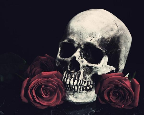 Black Roses By Zennie