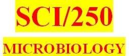 SCI 250 Week 3 Virus Matrix