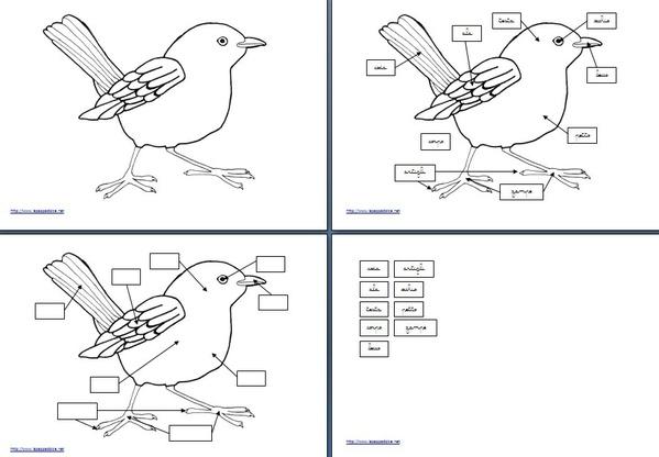 set per attività con l'incastro dell'uccello