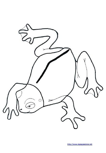 set attività per l'incastro della rana