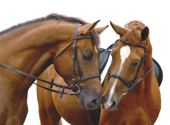 May 2013 Horse Sale Catalogue