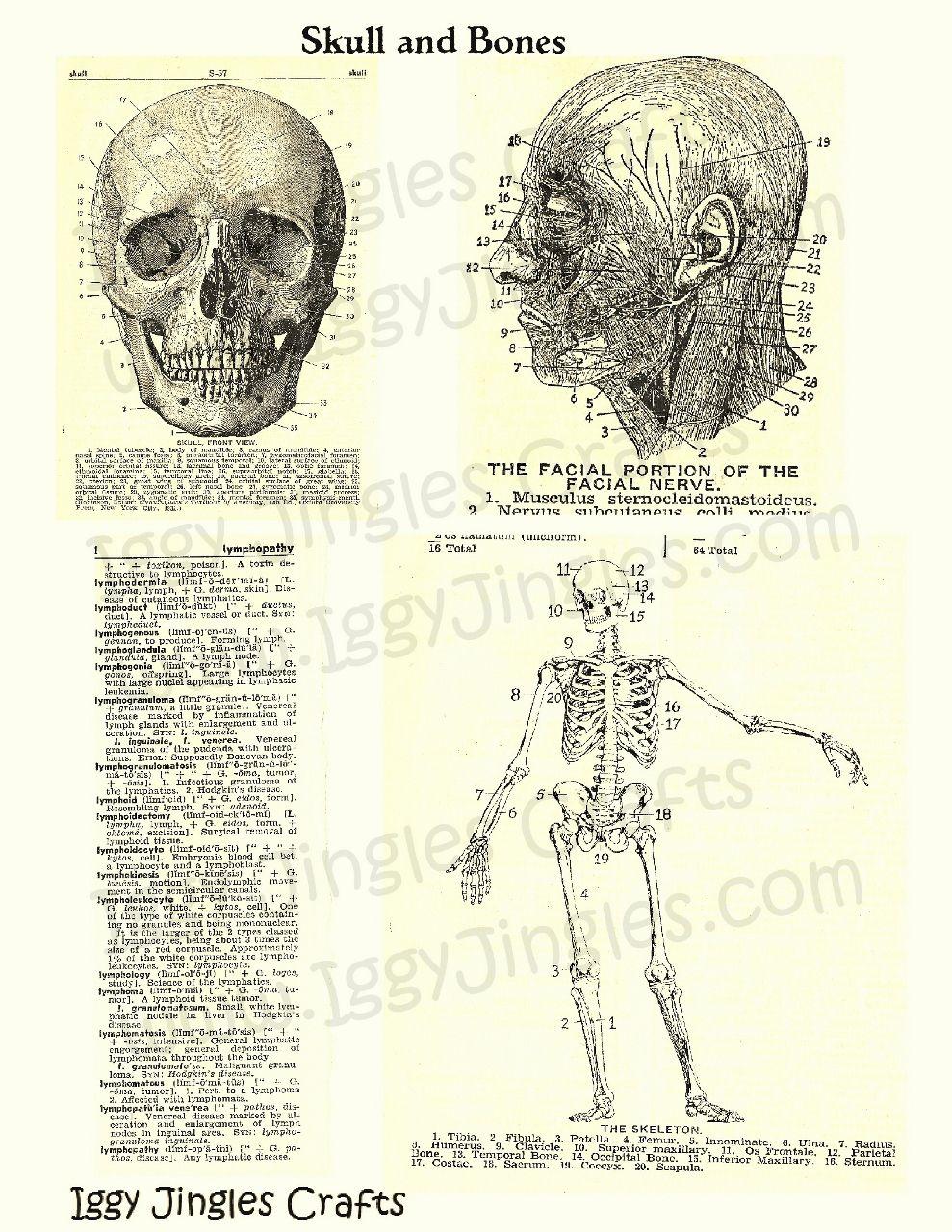 Sepia Skull and Bones Vintage Image Collage Sheet