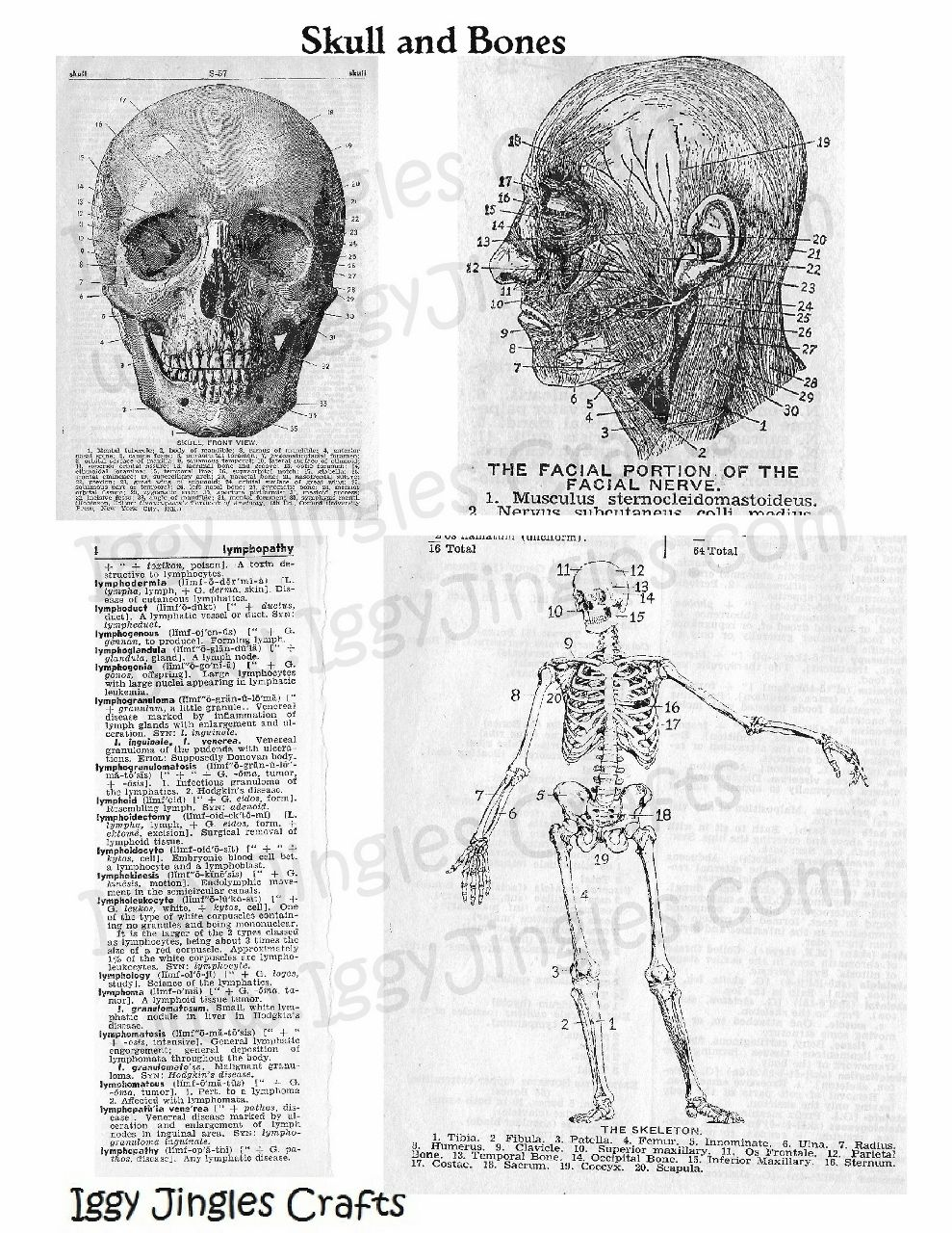 Skull and Bones Vintage Image collage sheet in Black and White